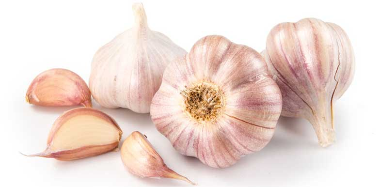 Garlic and Kyolic Aged Garlic Extract Immunity Boosters Carmia Borek