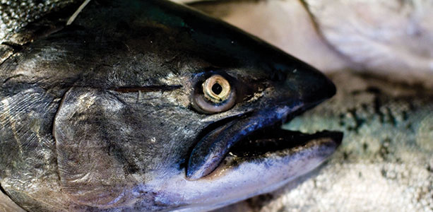 The Controversy over Fish Oils and Omega-3s