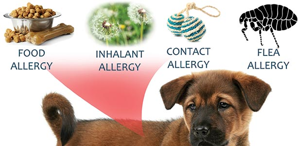 Herbs For Pets With Asthma